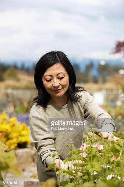 Mature Japanese Woman gardening.