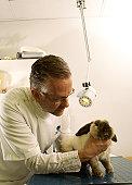 Mature male veterinary surgeon examining rabbit