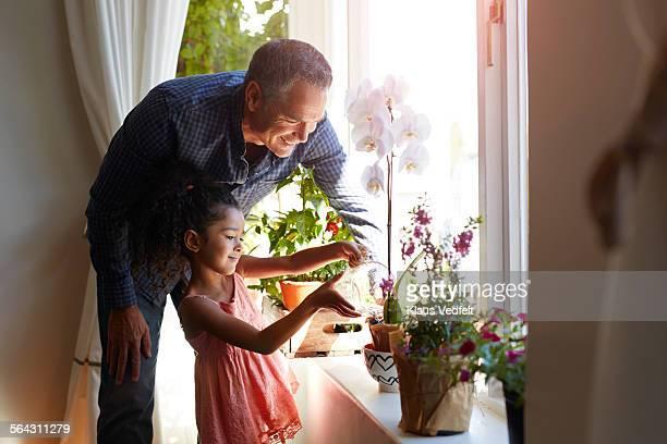 Mature man assisting granddaughter, watering plant