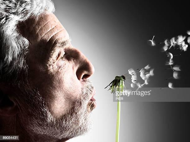Mature man blowing dandelion seeds