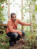Mature man by tomato plants greenhouse, smiling, portrait
