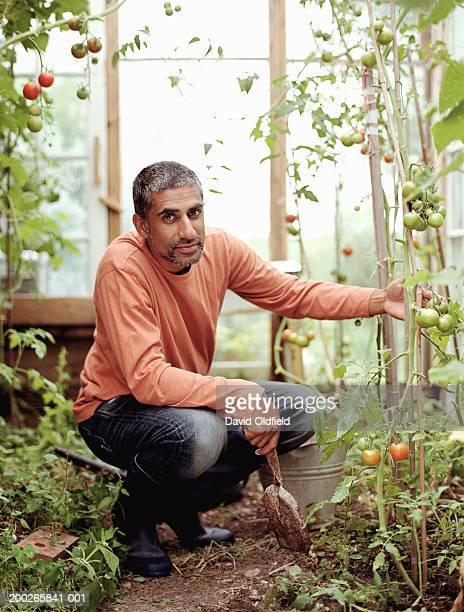 Mature man by tomato plants greenhouse, smiling, portrait