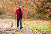 Mature Man On Autumn Walk With Labrador