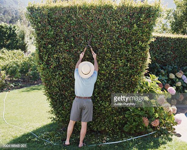 Mature man trimming hedge with garden shears, rear view