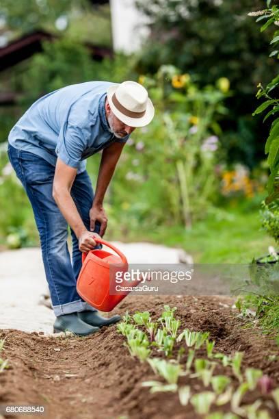 中年の男性が彼の有機野菜の庭の水やり