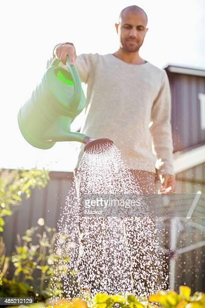 Mature man watering plants in garden