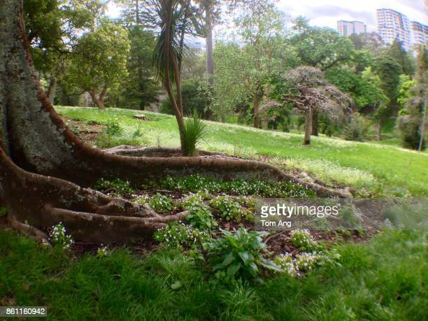 Mature tree with massive roots in city park with grassland and flowers.