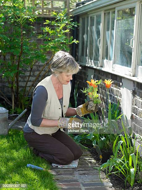 Mature woman potting plants in garden