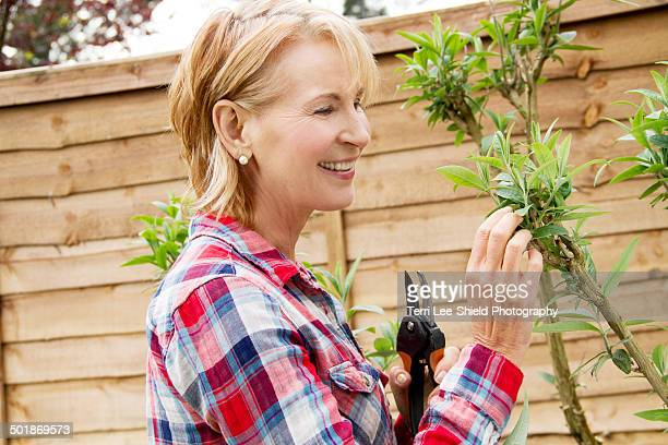 Mature woman pruning tree in garden