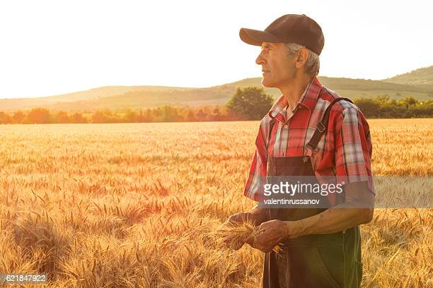 Matured farm worker standing in the middle of wheat field