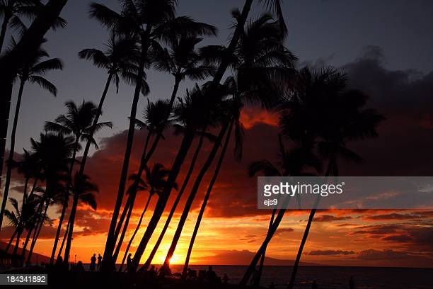 Maui Hawaii Pacific ocean palm tree sunset