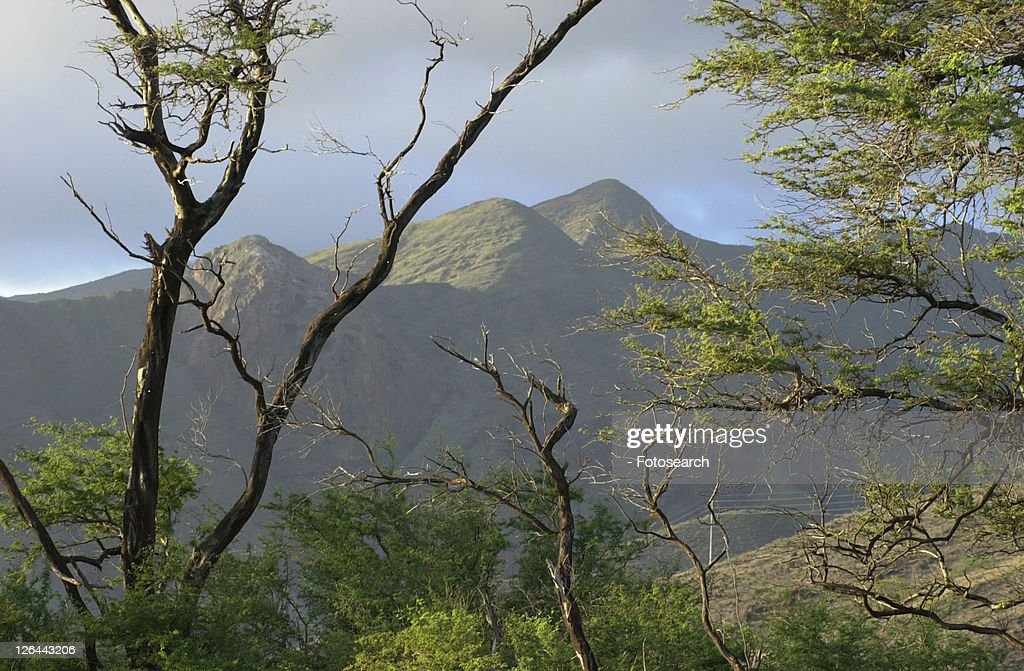 Maui - Hawaiian Islands : Stock Photo