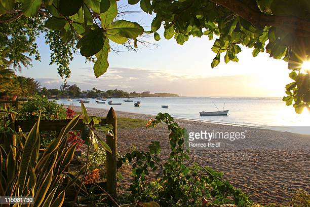 Mauritius - sunset under   leaves