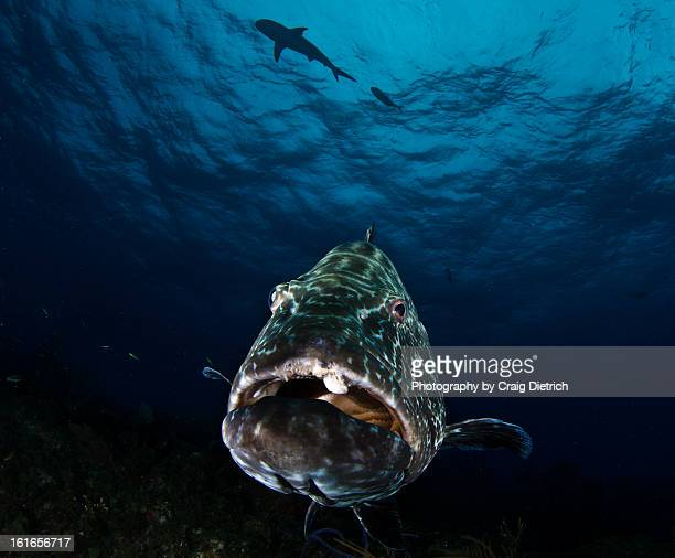 Max the Grouper