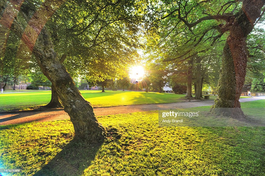 Maximum Flare (Schlosspark Heidelberg) : Stock Photo