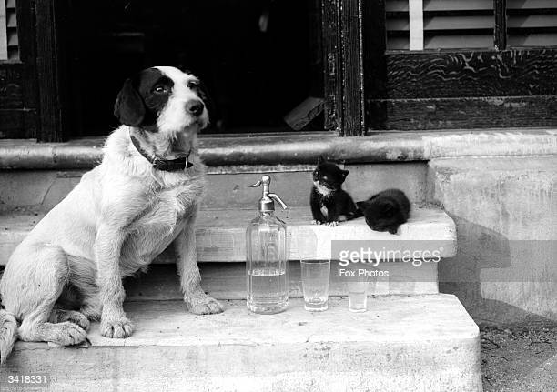 Two kittens a dog and a soda siphon