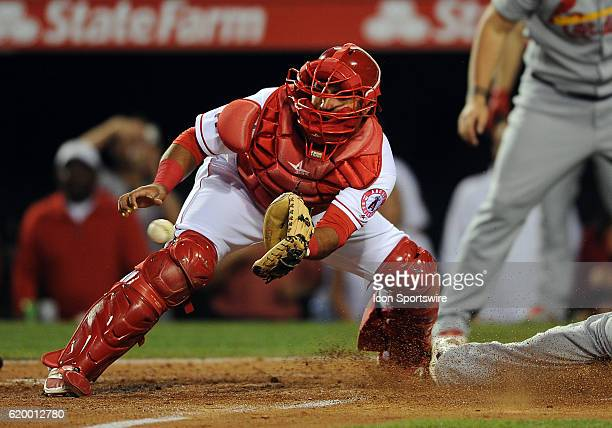 Los Angeles Angels of Anaheim catcher Carlos Perez gets the throw from the outfield to late to tag St Louis Cardinals runner Yadier Molina in the...