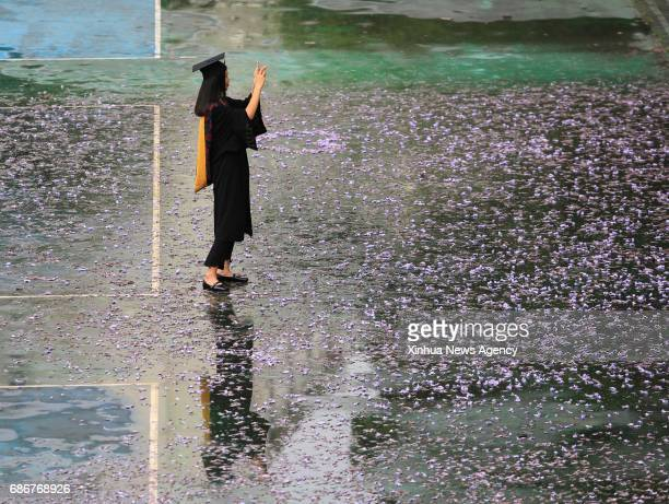 A graduate from Southwest University takes photos whilst the blossoms of Jacaranda flowers in Chongqing southwest China May 22 2017