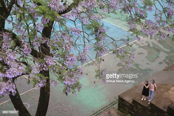 Students from Southwest University take photos whilst the blossoms of Jacaranda flowers in Chongqing southwest China May 22 2017