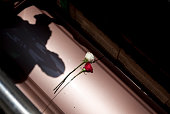 May 23 2011 – Sammy Treto's shadow is cast onto a casket as he lowers it below ground and into a lawn crypt following a graveside service at Mountain...