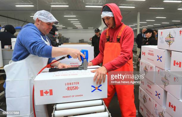 HALIFAX May 25 2017 Workers seal a box of live lobsters heading to China at a workshop of Nautical Seafoods Ltd in Annapolis Royal Nova Scotia Canada...