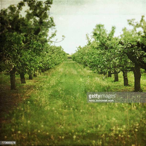 May. Apple trees, they have already lost their flo