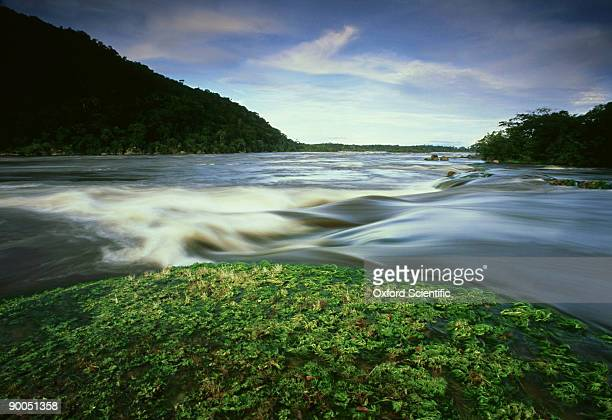 Maypures Rapids at high water, Tuparro, Eastern Lowlands, Colombia