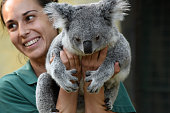 Mayra a 7 yearsold female of Koala pictured with her keeper at Madrid zoo