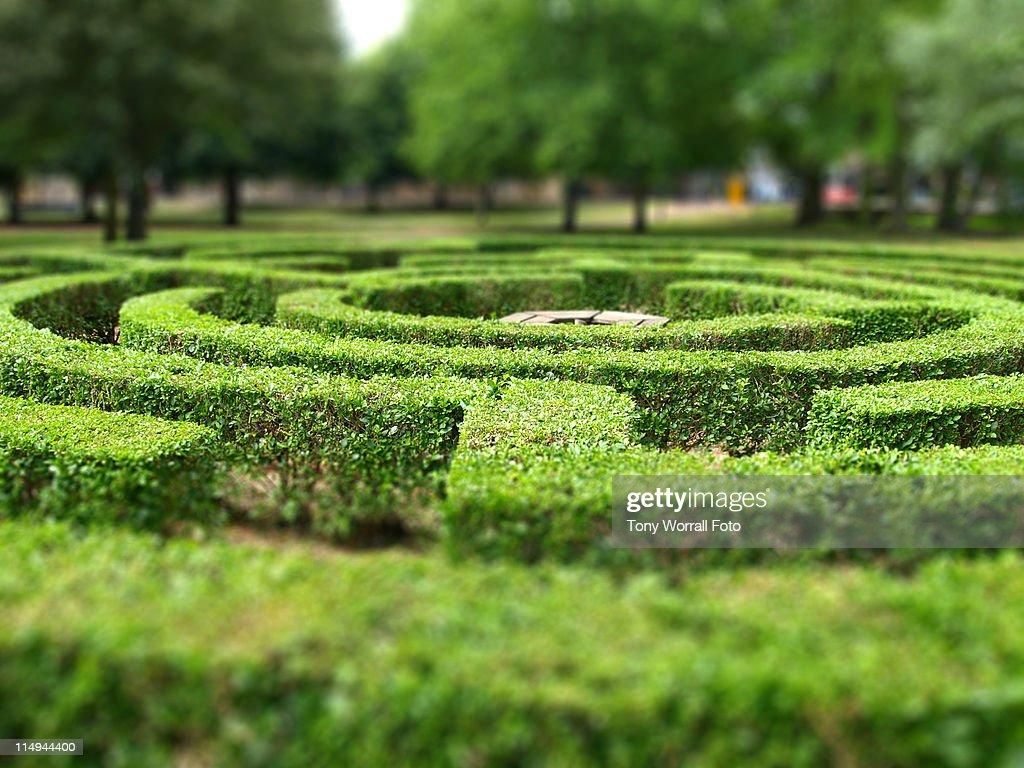 Maze in Huntingdon