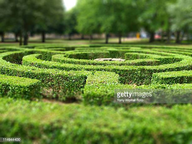 Maze in Huntingdon