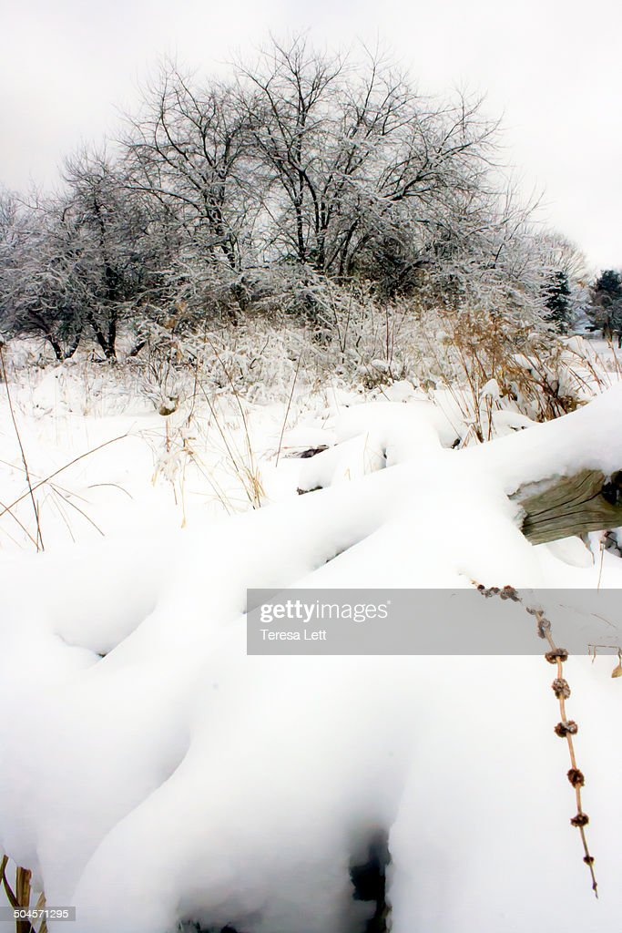 Meadow after heavy snowfall