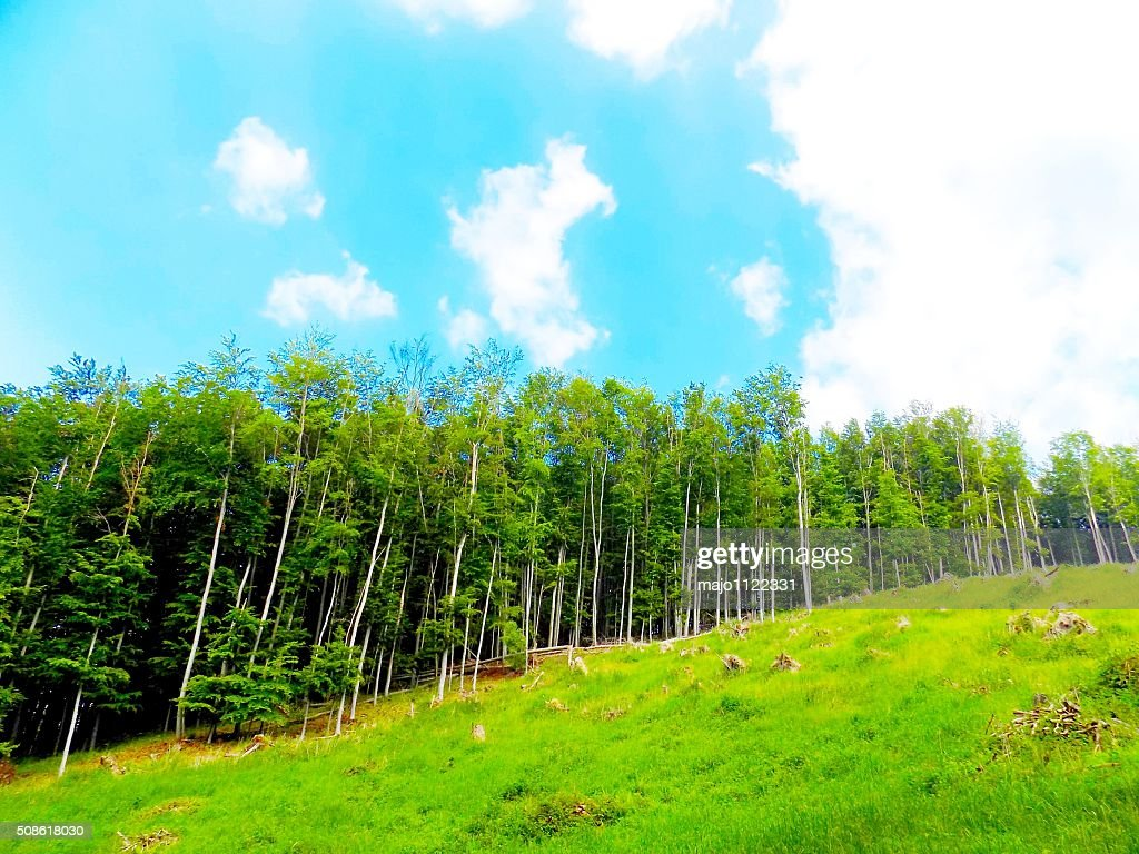 Meadow and forest : Stock Photo