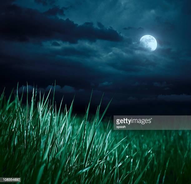 Meadow 夜の