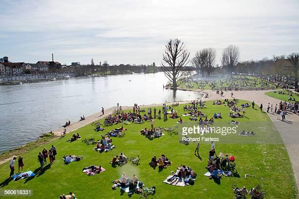 Meadow by the Neckar