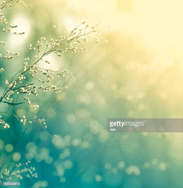 Meadow au coucher du soleil