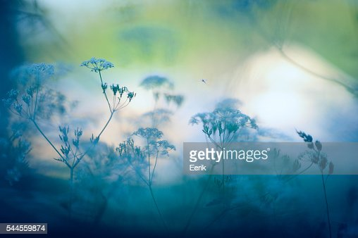 Meadow flowers : Stock Photo