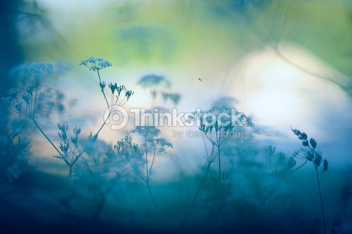 Meadow flores : Foto de stock