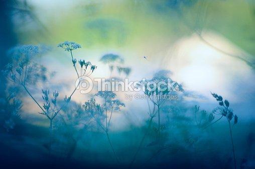 Meadow flowers : Stock Photo
