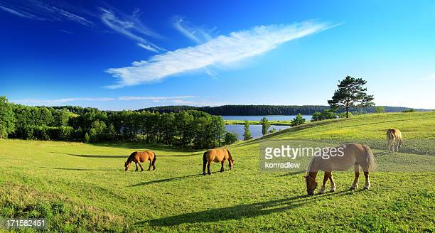 Meadow, chevaux, arbre solitaire au coucher du soleil et lac – format paysage