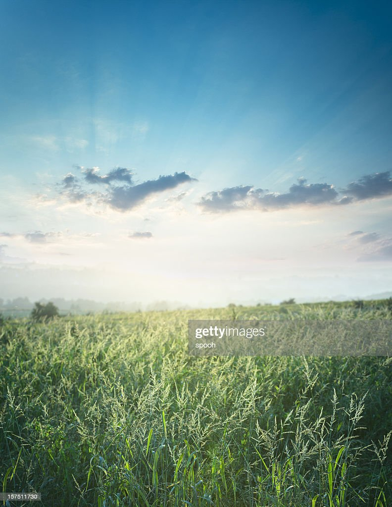 Meadow in the evening : Stock Photo