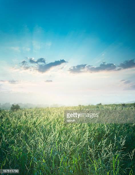 Meadow 夜に