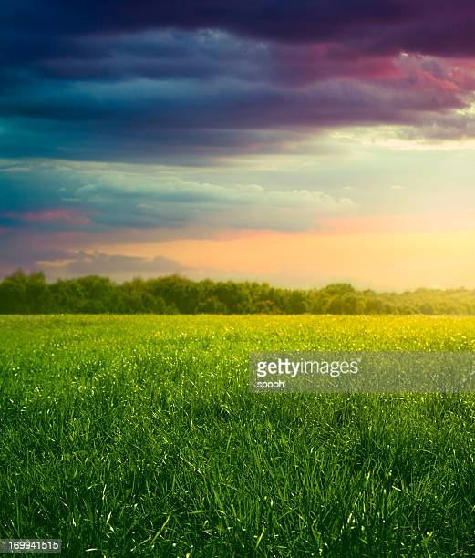 Meadow in the evening