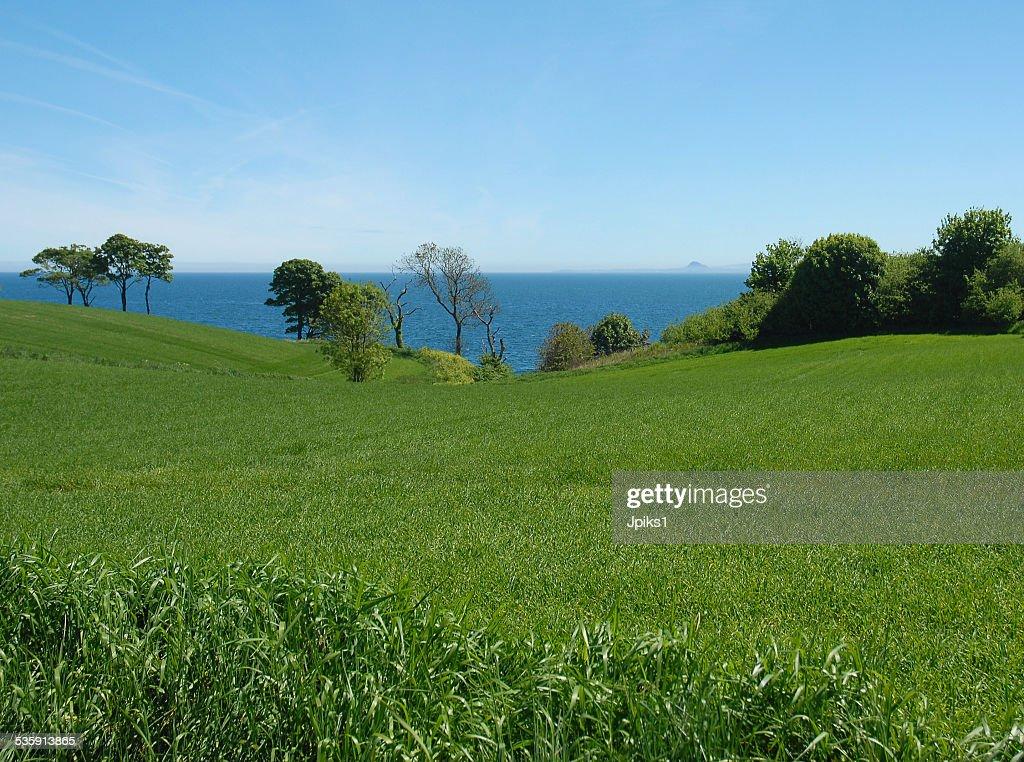 Meadow on sea shore : Stock Photo