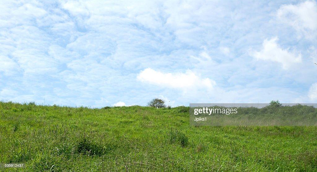 Meadow : Stock Photo