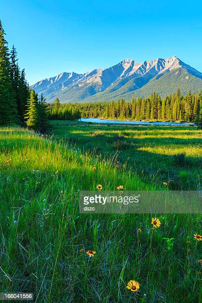 meadow, wildflowers, river, forest, mountain, clear blue sky, Canada Rockies