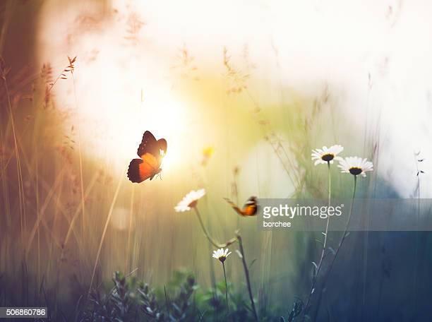 Meadow avec des papillons