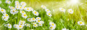 Meadow with many spring flowers and space for your text