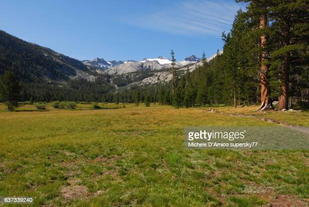 Meadows and dying glaciers