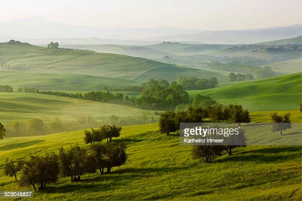 Meadows, fields and olive trees in the morning light, Pienza, Val dOrcia, Tuscany, Italy, Europe