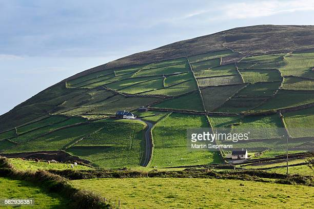 Meadows with walls, Firkeel, Beara Peninsula, Cork, Republic of Ireland, British Isles, Europe
